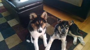 Lola and Macy Happy Tail