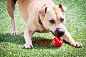 Sassy 4