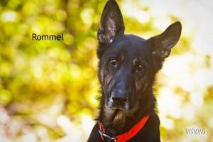 Rommel 2