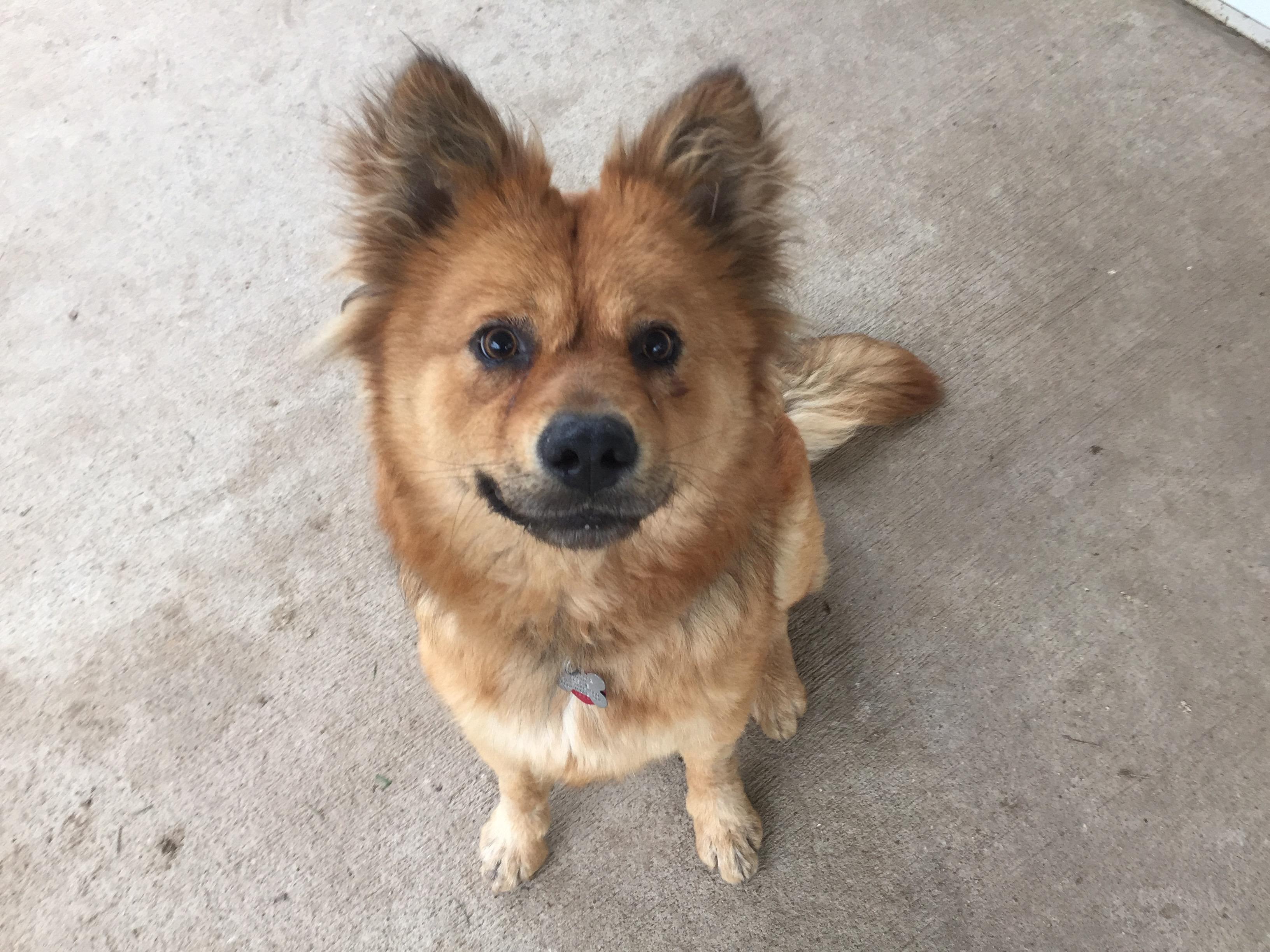 Cedar Rapids Adopt Dog