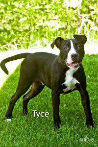 Tyce 2